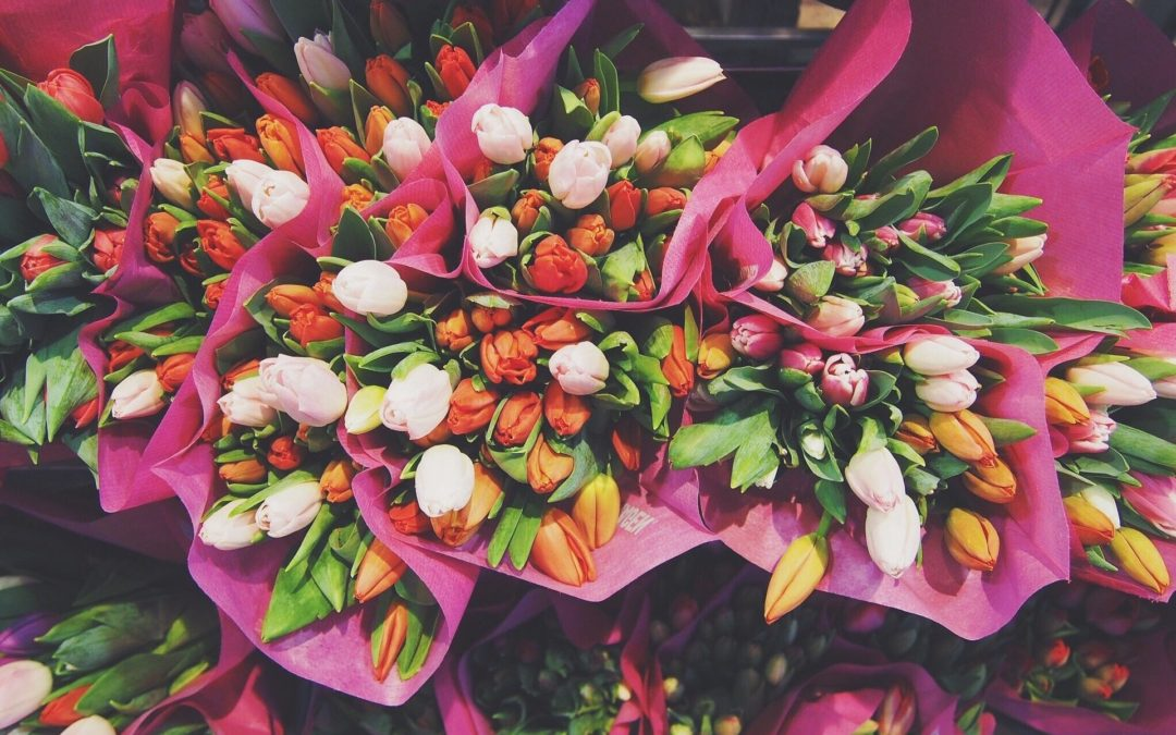 Rosen, Tulpen, Nelken – Wie nachhaltig sind Schnittblumen?