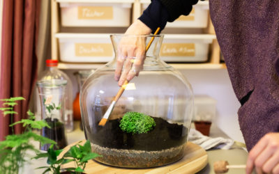 Pflanzen unter Glas – ein Terrarium brauchst du nur drei Mal im Jahr gießen