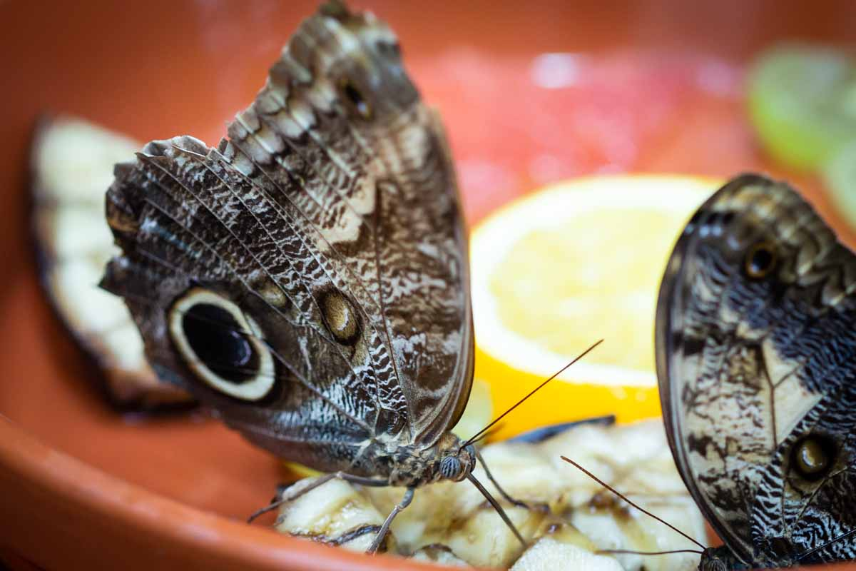 Schmetterlinge im Schmetterlingshaus